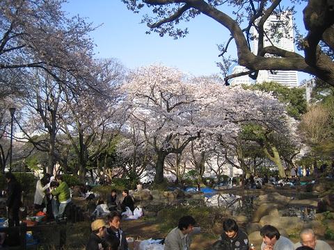 220403かもん山公園でお花見 (5).JPG