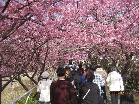 桜のアーチ.JPG