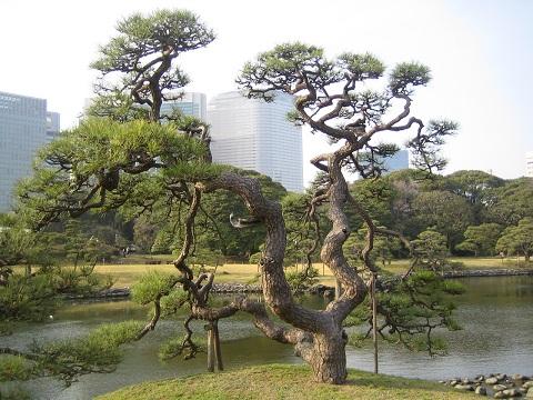 築地・浜離宮公園 写真 064 (18).JPG
